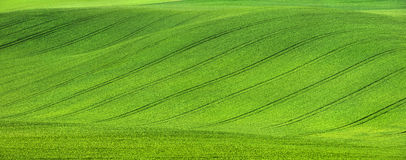 Field on the hill with tractor trails Stock Photo