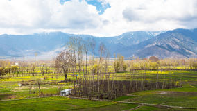 The field with Himalaya background Stock Photo