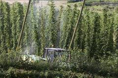 Field of hop Royalty Free Stock Images