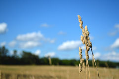 The Field of Hope Royalty Free Stock Photography