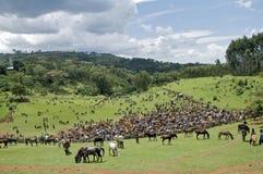 Field of horses