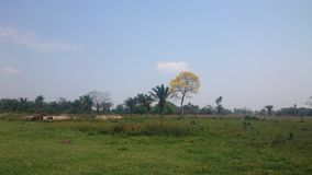 Field with horses. In the field you will find palm trees and a tree with yellow leaves and three serca horses from a water fountain royalty free stock photography