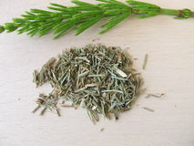 Field Horsetail, Equiseti herba Royalty Free Stock Image