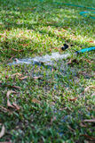 Field hosepipe sprinkler grass Royalty Free Stock Image