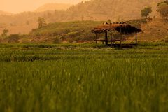 Field and hut. In chiang rai (thailand stock photography