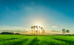The field. I`m photographer from Vietnam Royalty Free Stock Photography