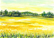 Field. Illustration of rural landscape with rapeseed field.Picture created with watercolors Stock Photo
