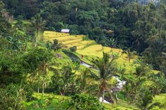 Field in Indonesia Stock Image