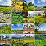 Field in Indonesia Royalty Free Stock Image