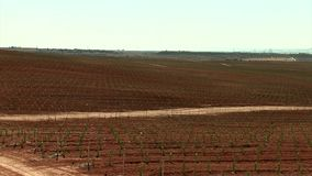 Field with infant olive trees and ocean background in Murcia stock video