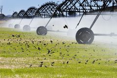 Field irrigation Royalty Free Stock Images