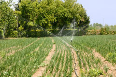 Field irrigation Royalty Free Stock Image