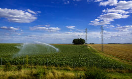 Field irrigation with a crop. Field watering with a crop in the summer Royalty Free Stock Photos