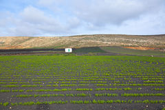 Field with irrigation system on volcanic lapilli ground Royalty Free Stock Photo