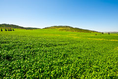 Field in Israel Royalty Free Stock Images