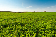 Field in Israel Stock Photography