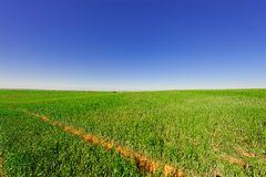 Field in Israel Stock Photo