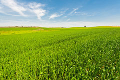 Field in Israel Royalty Free Stock Image