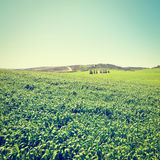 Field in Israel Royalty Free Stock Photography