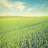 Field in Israel Royalty Free Stock Photo