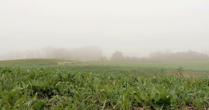 Field with lake covered with fog. 4k stock footage
