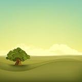 Field Landscape. Summer Field Landscape. Eniroment Background. Vector Illustration Stock Photo