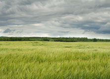 Field - landscape Royalty Free Stock Photos