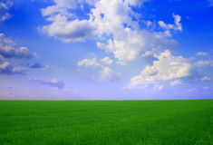 Field  landscape Royalty Free Stock Images