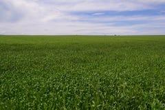 Field landscape Royalty Free Stock Photos