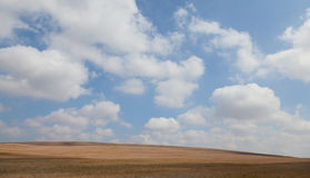 Field landscape with clouds. Yellow field with beautiful clouds Stock Images