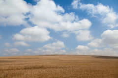 Field landscape with clouds. Yellow field with beautiful clouds Stock Photo