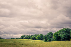 Field landscape with cloudy weater Stock Photos