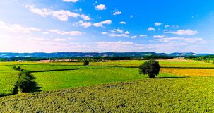 Field landscape in the countryside Stock Images