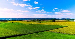 Field landscape in the countryside Royalty Free Stock Photos