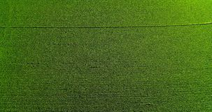 Field landscape in the countryside Royalty Free Stock Images