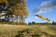 Field landscape and falling leaf Royalty Free Stock Photography