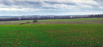 Field Landscape Stock Images