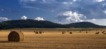 Field landscape. Field after harvest.The end of summer royalty free stock photography