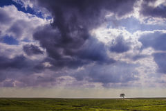 Field Landscape with lonely tree Stock Photography