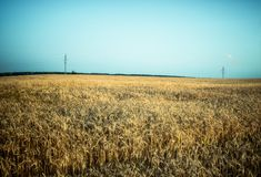 Field landscape royalty free stock photos