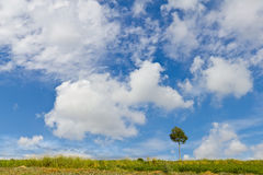 Field landscape with solitary tree Stock Photos