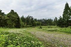 Field landscape Stock Photo