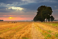 Field landscape with straw bales Stock Photography