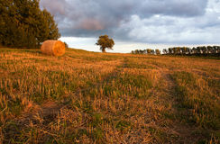 Field landscape with straw bales Royalty Free Stock Image