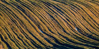 Field landscape at sunset, lines Stock Photos