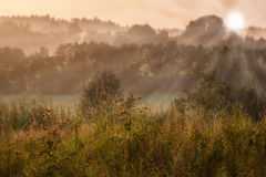 Field landscape during the sunset. Field landscape under the summer sunset with sunrays and forest in the background Royalty Free Stock Photos