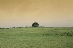 Field landscape with a tree Stock Photography