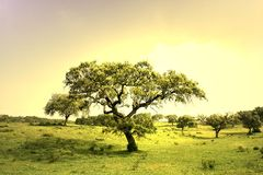 Field landscape with trees Stock Photos