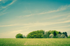 Field landscape with trees Stock Images