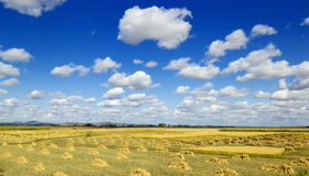 Field landscapes Royalty Free Stock Photo
